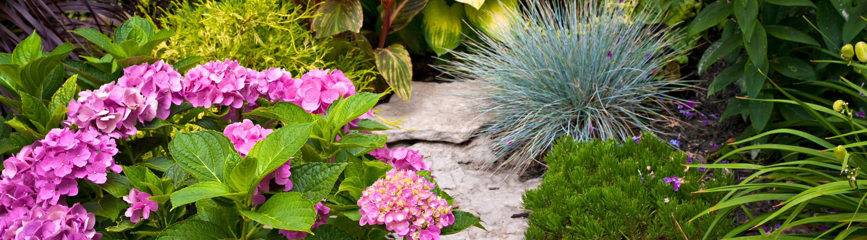 Garden Design Courses in London City Lit